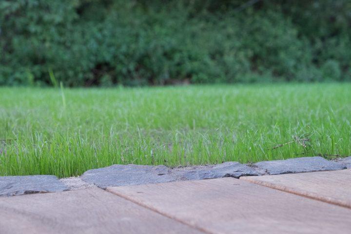 Der Rasen nach zehn Tagen