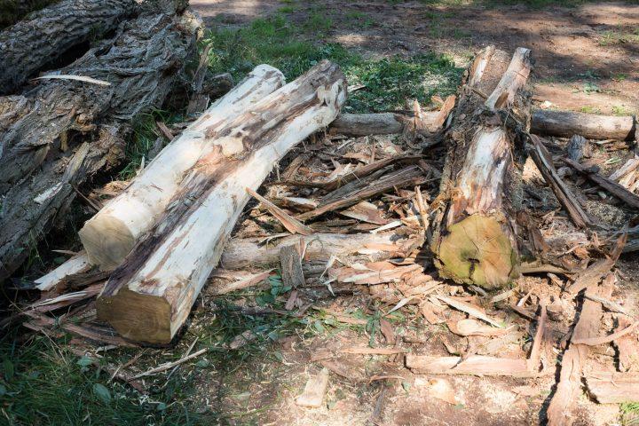 Zwei geschälte Baumstämme und einer in Arbeit