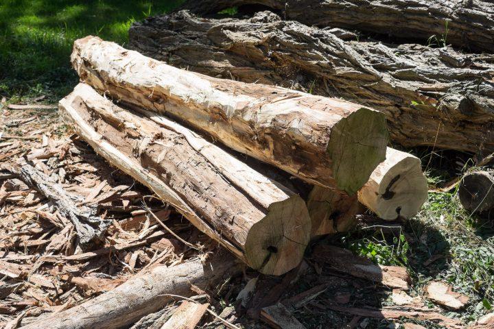 Die Baumstämme nach dem Schälen