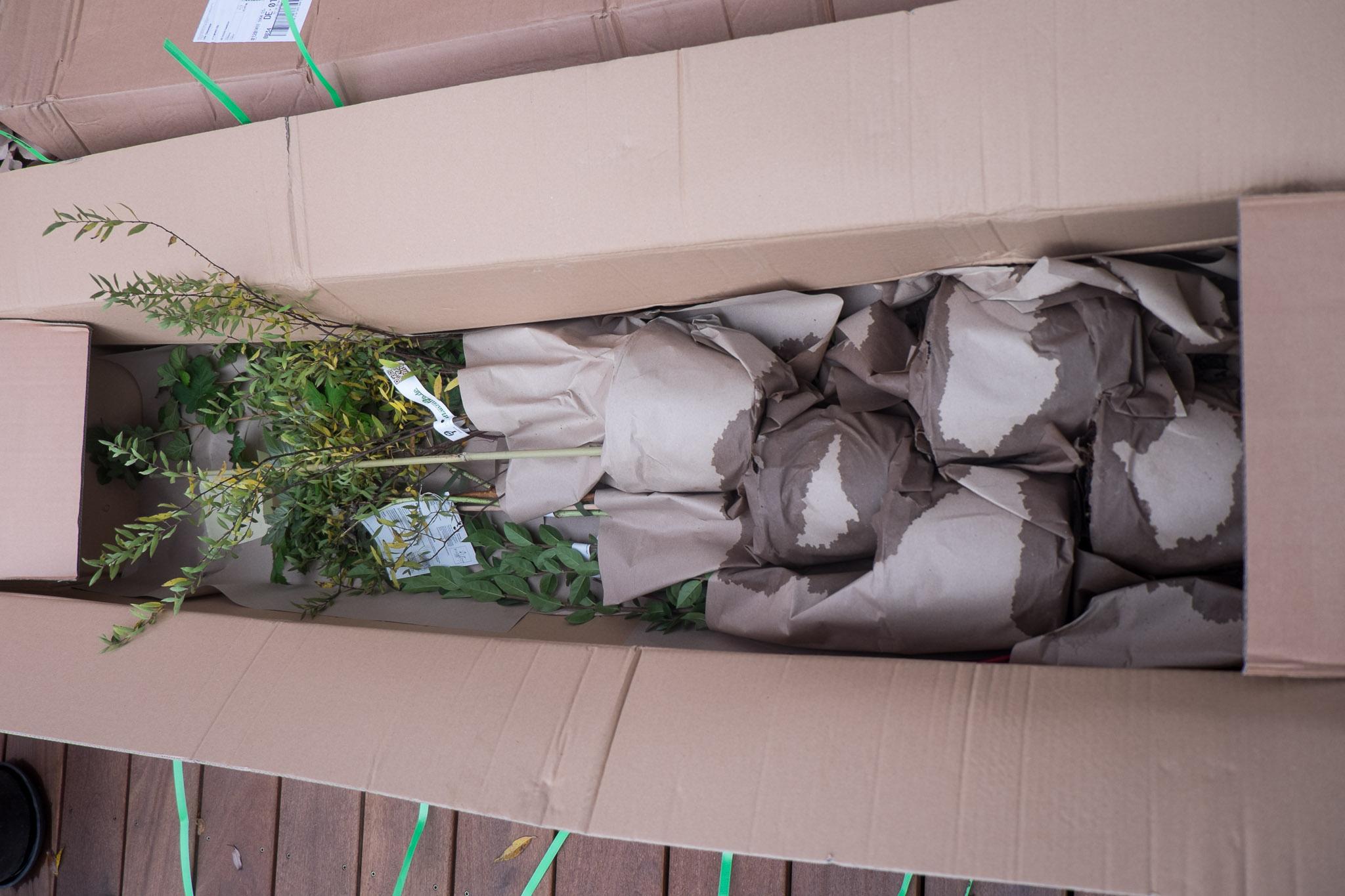 pflanzen im garten ein haus f r den zwerg. Black Bedroom Furniture Sets. Home Design Ideas