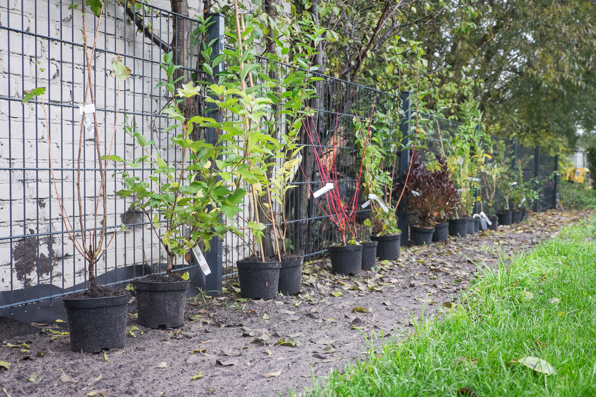 Pflanzen im Garten – Ein Haus für den Zwerg